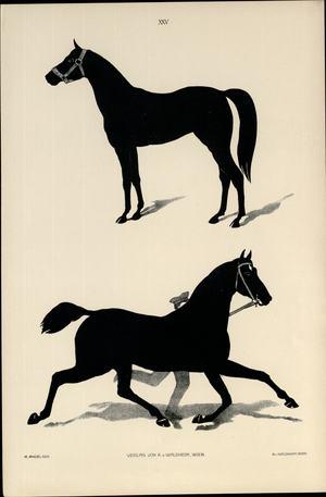 Tough 1 1200D Poly participation Feuille American Legend DENIM imprimer Horse Tack